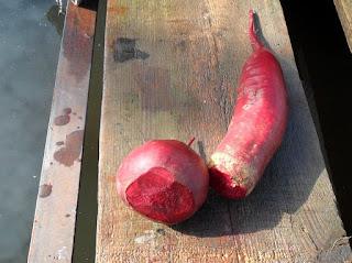 Корнеплоды свеклы перед хранением обрезаю