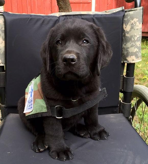 15 adorables cachorros de perros en su primer día de trabajo