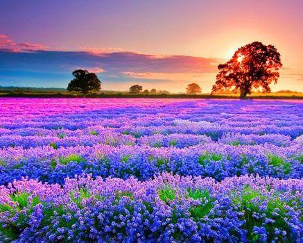 hình ảnh hoa đẹp nhất thế giới 3