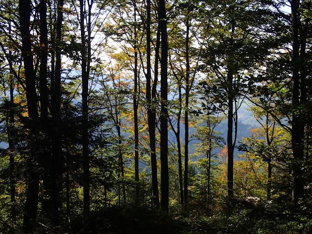 Beskidzko-wyspowy las