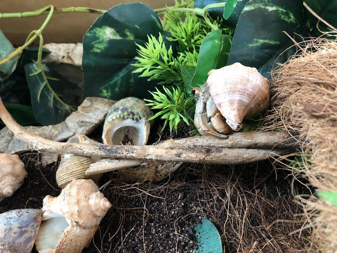 Hermit Crab Cottage Hermit Crab Toy Ideas