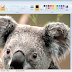 edit online pictures directly in microsoft paint without downloading