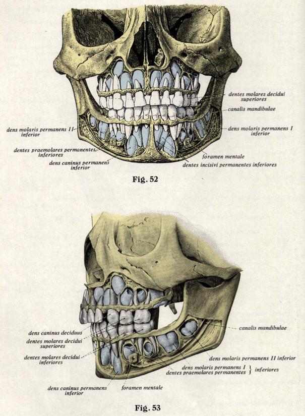Ders Notlari Eklemler Apertura sinus sphenoidalis (2) in front surface. ders notlari blogger