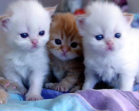 3 Gatitos cachorros
