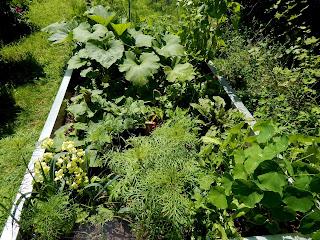 Biovegan gärtnern Gartenbuch