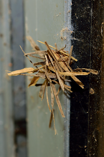 Mud Grass Insect Nest