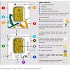 5 Langkah Cara Investasi Emas Batangan Antam untuk Pemula