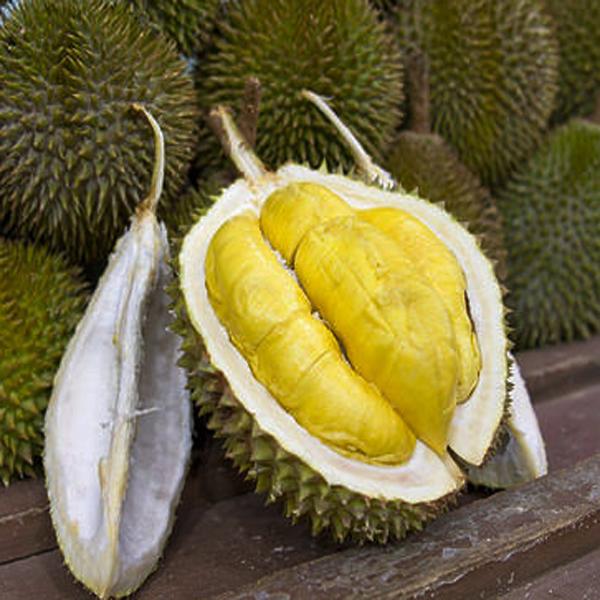Durian, Manfaat Durian, Khasiat Durian