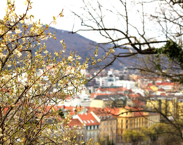 Graz Austria Photo Blog | Little Owl Lane