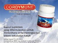 Cordimune - Ekstrak Cordyceps Sinensis (Cordyceps Sinensis Alohaensis Hybrid HEAA)
