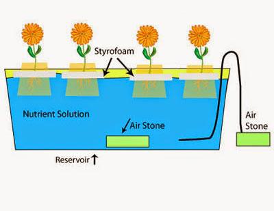 hidroponik sistem water culture