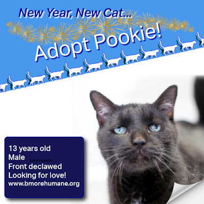 Pookie is a black 13-year-old male who is front declawed. Photo courtesy Baltimore Humane Society.