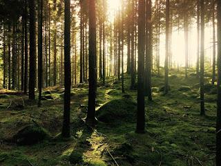 Лучшие фото леса