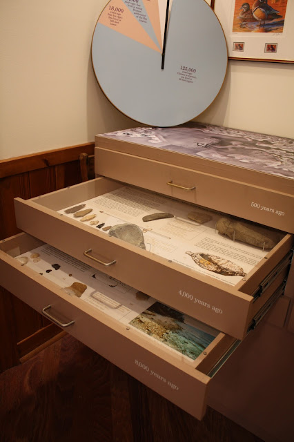 Chesapeake Bay area fossils and artifacts
