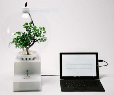 Talk to Your Plants with the Help of Microsoft's Research Project Florence
