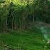 Kearifan Lokal Suku Dayak Terhadap Alam