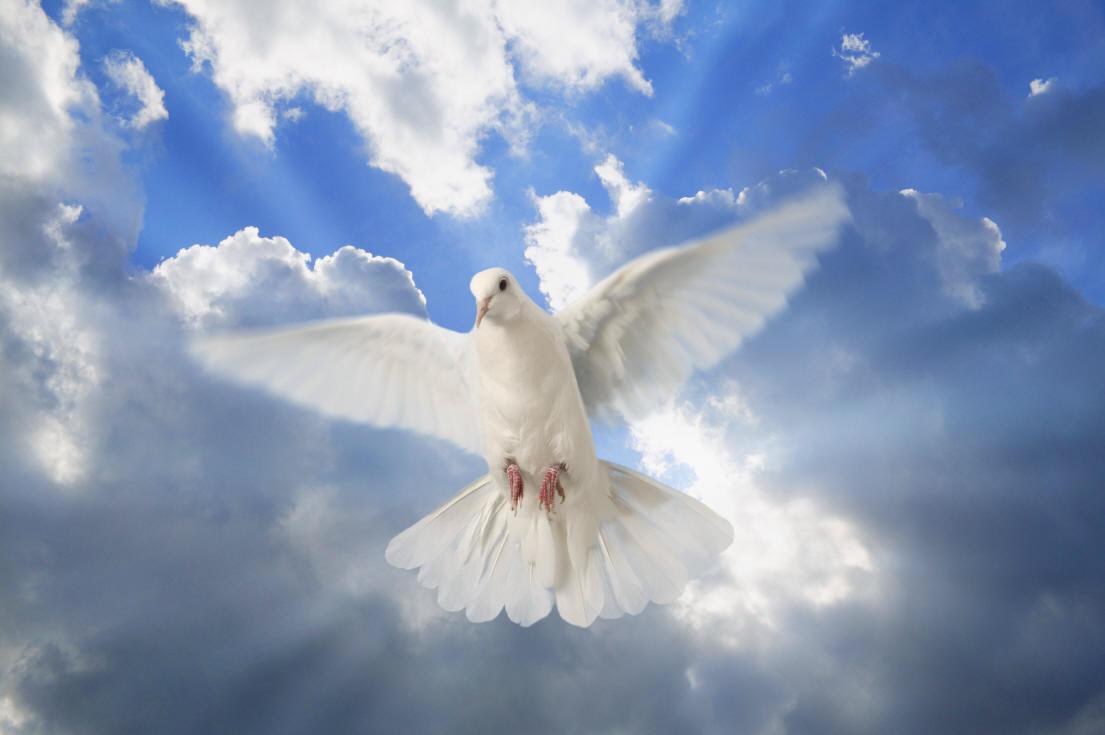 Image result for wind holy spirit
