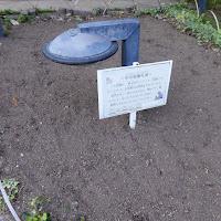 花博記念公園鶴見緑地 フランスの庭園 花壇