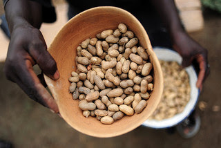 Peanuts grown in Sierra Leone.