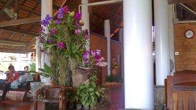 maceta de orquideas en el aeropuerto de sukhothai