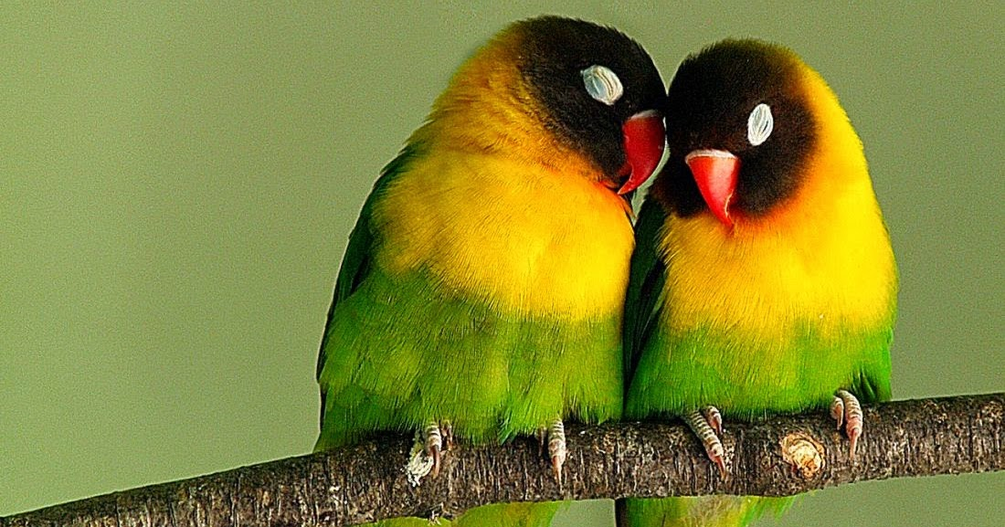 Images Cute Birds Fall Love Hd Desktop