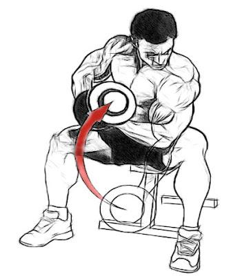 Get Bigger Biceps Fast