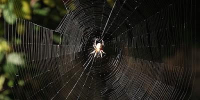ωφέλιμα έντομα-Αράχνες