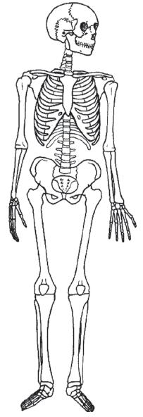 Bagian-Bagian Rangka Tubuh Manusia ( Rangka Kepala, Badan, dan Anggota Gerak ) beserta Fungsinya