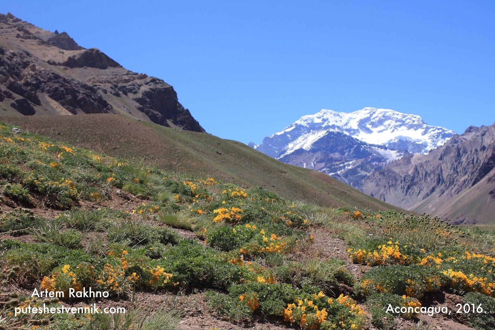 Цветы Adesmia и гора Аконкагуа