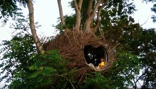 Sarang Burung Raksasa Bukit Love Karimunjawa