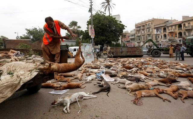 Photos: Pakistan government poisons hundreds of stray dogs to death