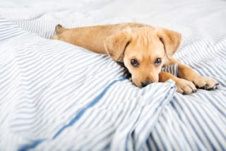 Accessories You Need Before Bringing Puppy Home