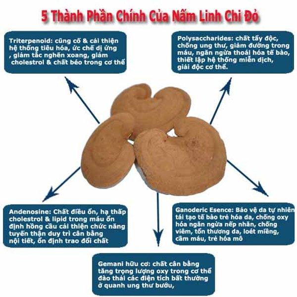 Hoạt chất nấm linh chi tốt đa diện cho sức khỏe con người
