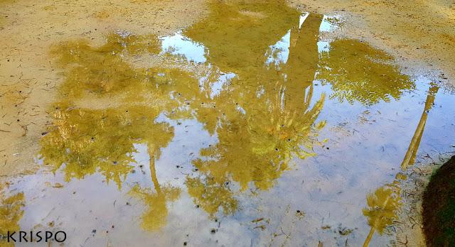 palmeras y árboles del alcazar de sevilla reflejadas en un charco