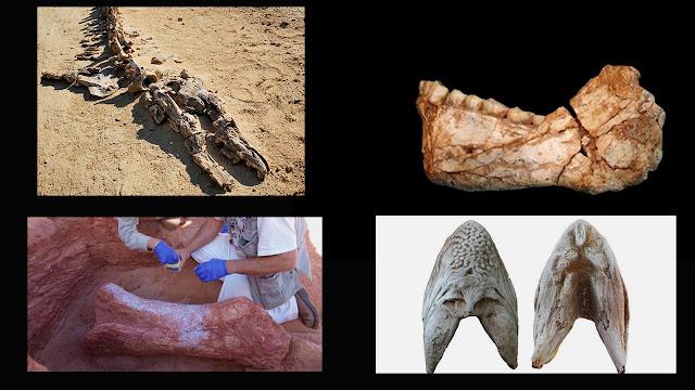10 Fosil Luar Biasa Ditemukan Di Gurun Sahara