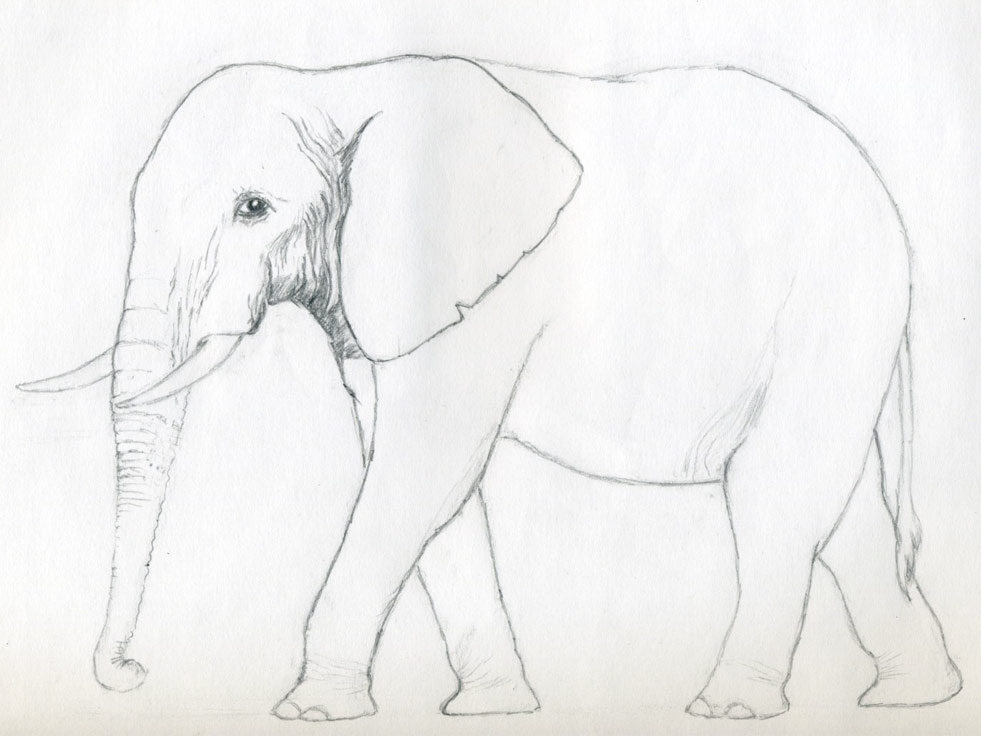 Elephant Drawing ~ 3D Drawing
