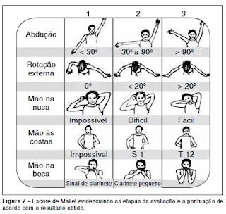 Escala de Mallet para leccion de plexo braquial o paralisis de ERB