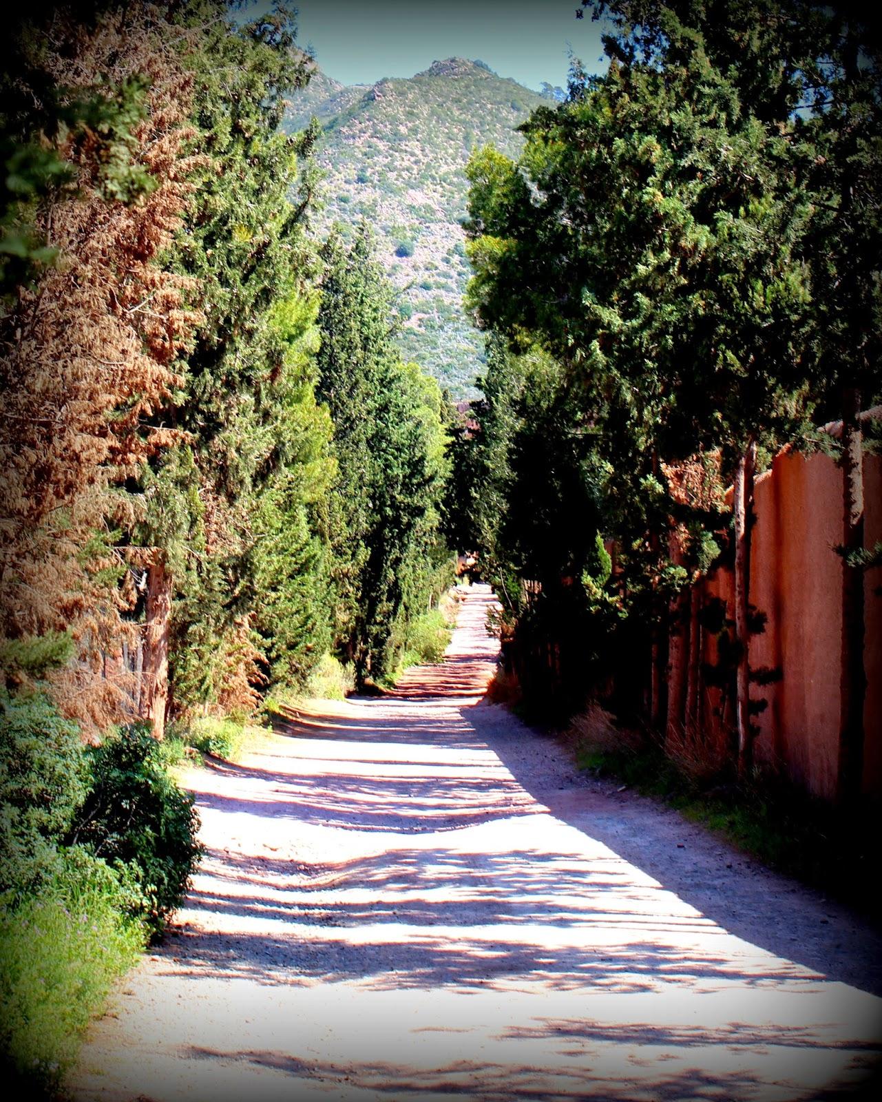 Camino de cipreses junto a la valla de la Cartuja de Porta Coeli-Sierra Calderona