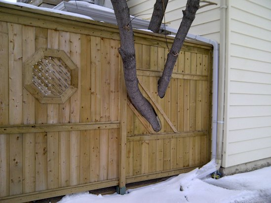 13 Times Humans Respected Mother Nature - The Tree and the Fence-