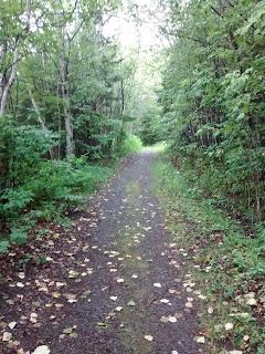 Sentier arbres forêt Parc du Bic