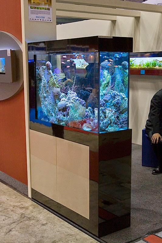 Aquarium solo