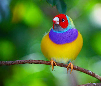 kecantikan burung