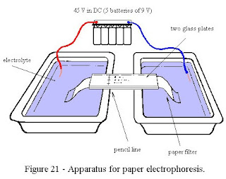 Pengertian Elektroforesis