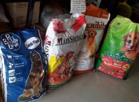 Animals Care Tips Mudah Merawat Siberian Husky