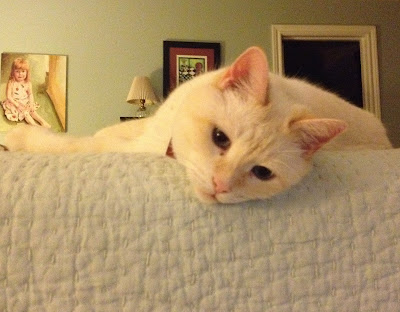 a white cat lounging on the bed
