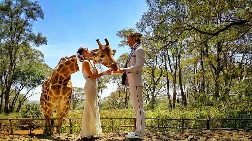 Giraffe Center, Nairobi - Acrobat Couple Gets Married In 38 Different Places Around The World In 83 Days