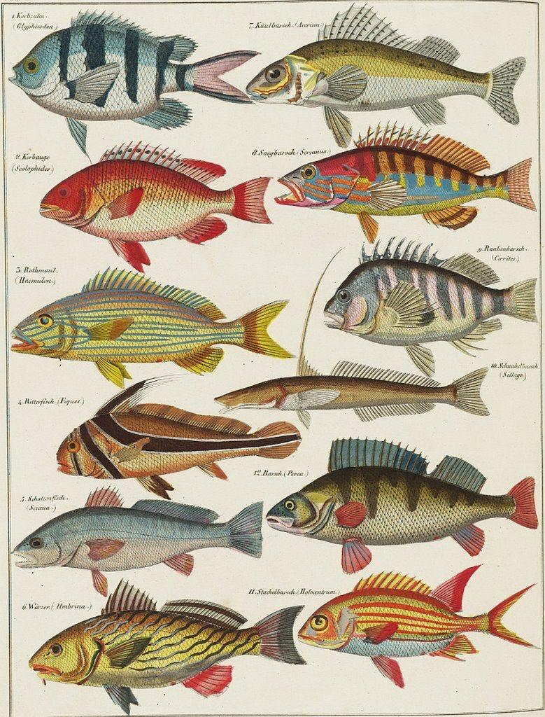 Espécies de Peixes