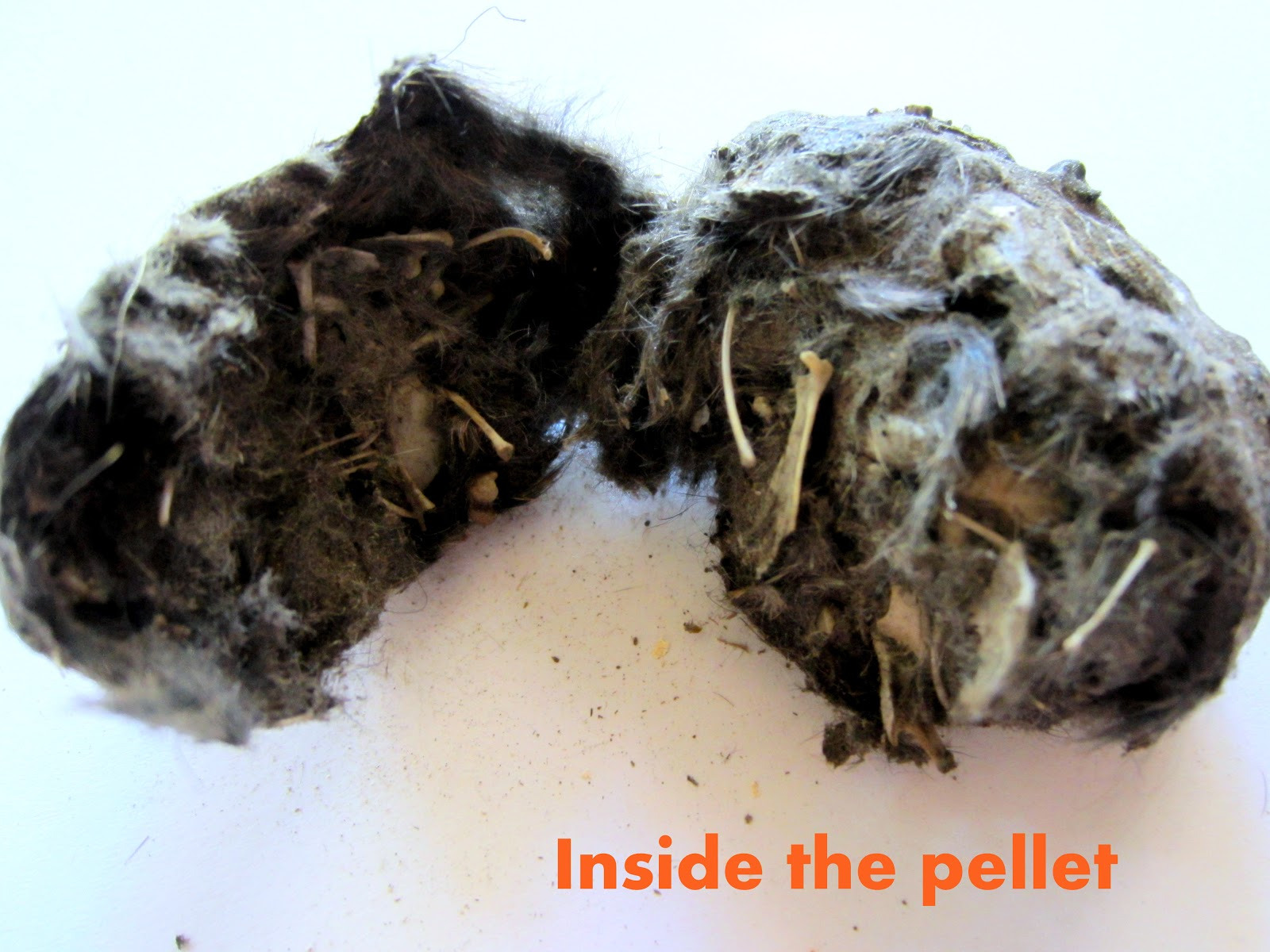 The Educators Spin On It Dissecting Owl Pellets After School