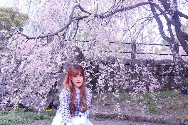 fukuoka castle cherry blossom festival