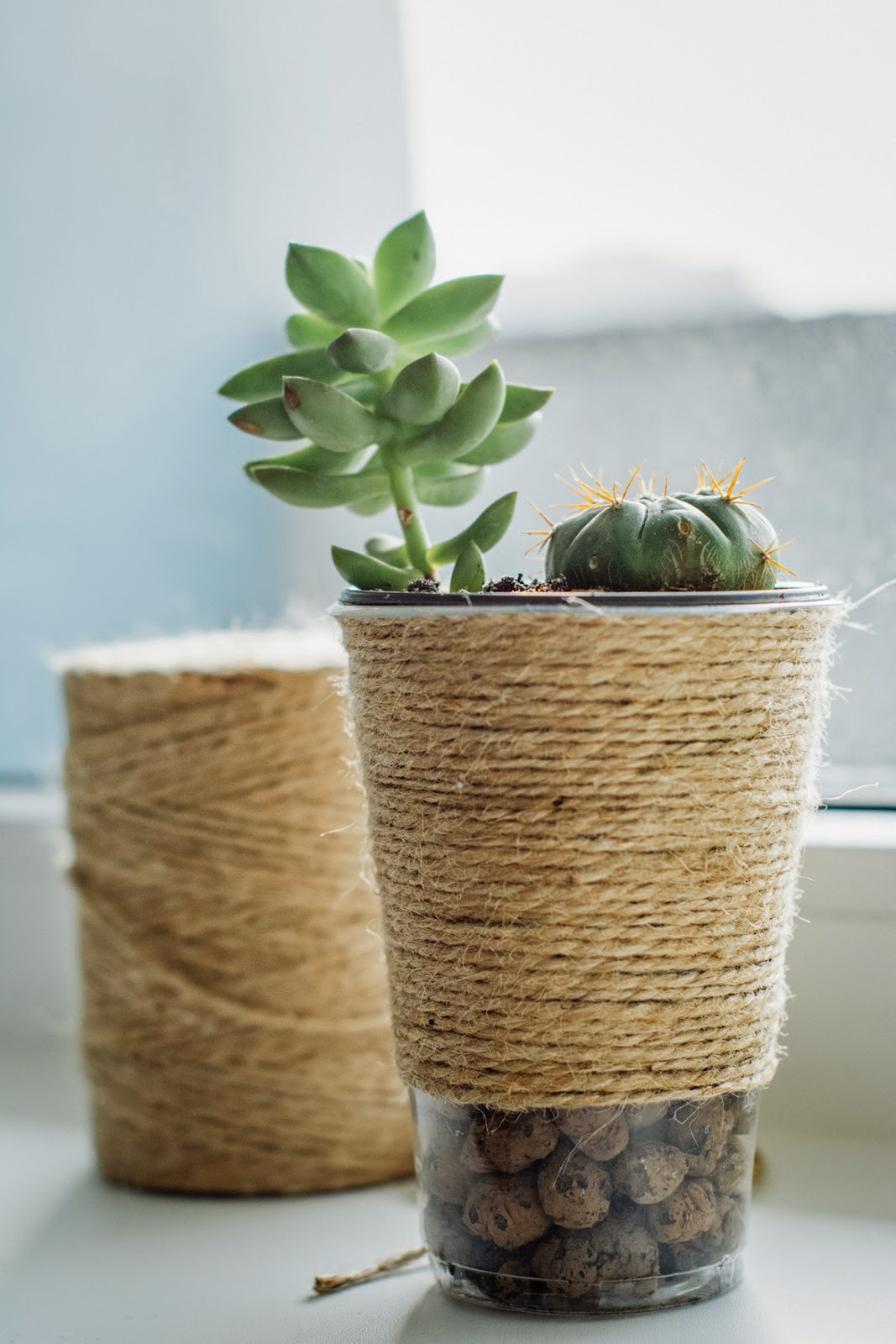 DIY pot and cups for succulent plants